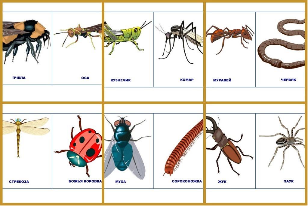 с знакомим насекомыми малышей