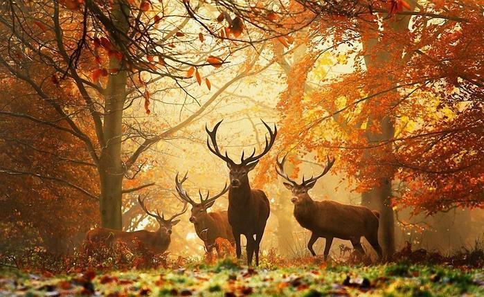 красота осенней природы картинки