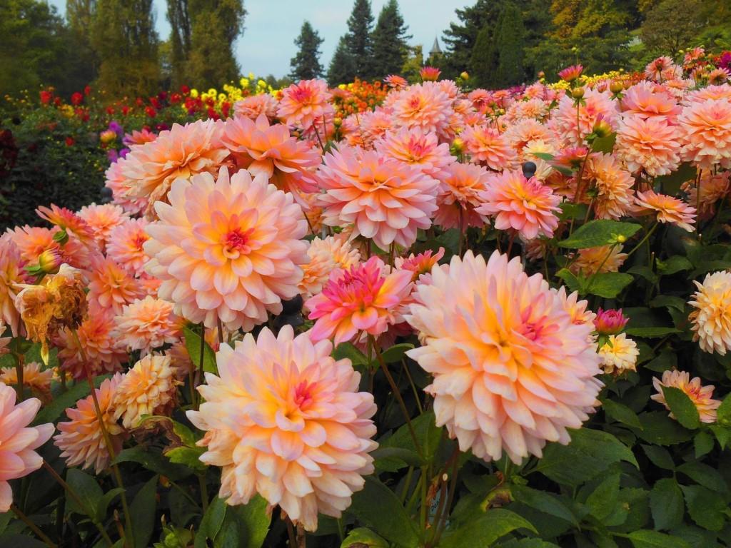 Стихи о цветах на конкурс