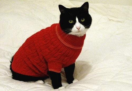 Кошка на свитере своими руками