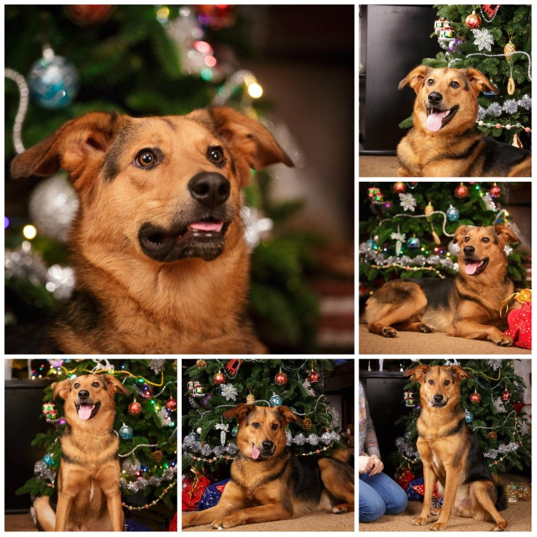 Сайт Собачьих Знакомств