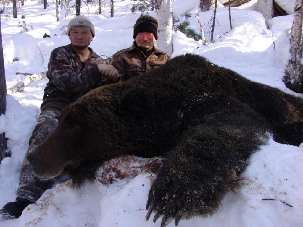 медведя хмао видео берлоге в охота