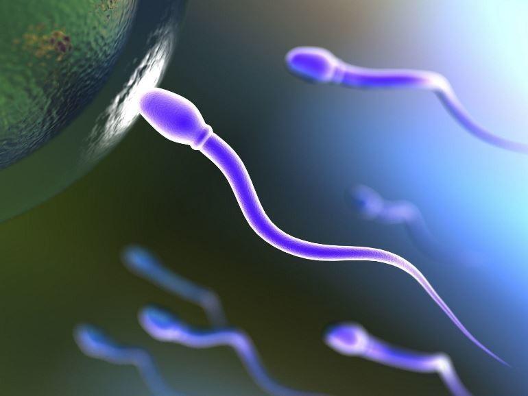 kak-vliyaet-flyuorografiya-na-spermu-pri-zachatii