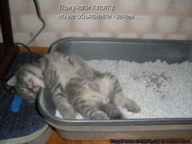 Кошка перестала ходить в туалет что делать