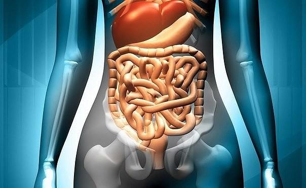 Кофеин быстро всасывается в толстом кишечнике и по венозной системе оказывается в печени, практически не проникая в артериальный кро.