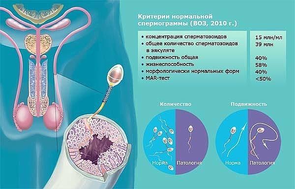 ot-chego-zavisit-struya-spermi