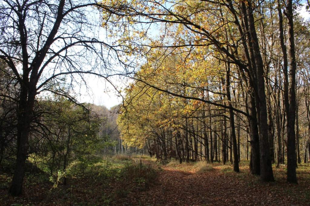 В Курской области установлены границы лесничеств