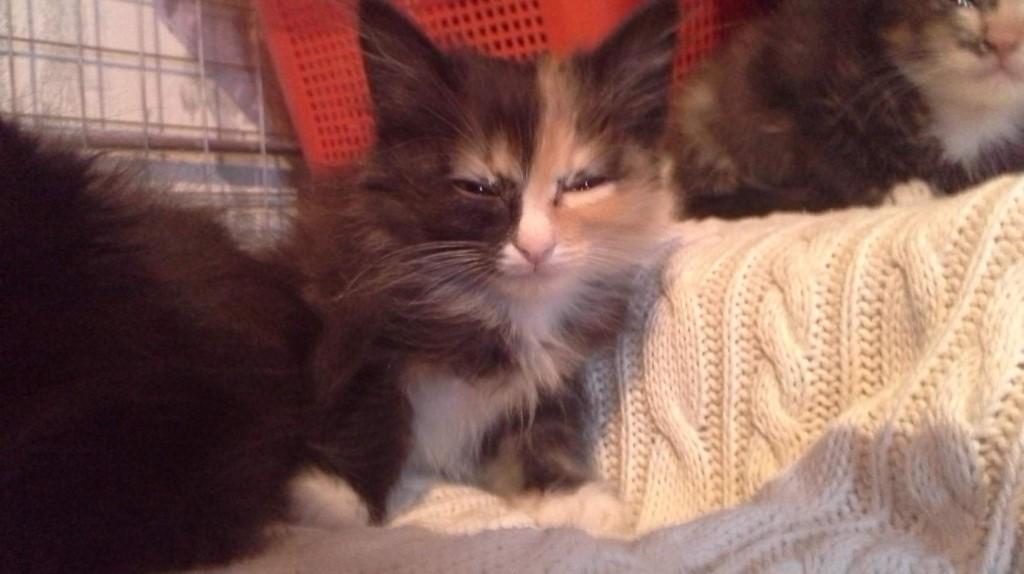 Отдам котят в добрые руки,котятам 2 месяца , ходят в лоток,всё едят,89521637625